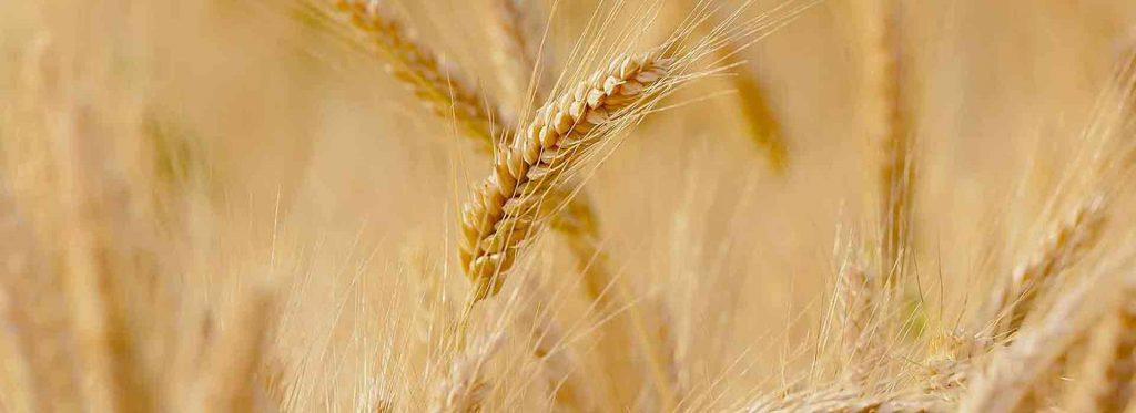 Progetto_Smart_Agriculture_Team_HOME_GruppoFilippetti